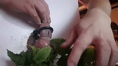 CBT cock tortured with stinging nettles in a jar